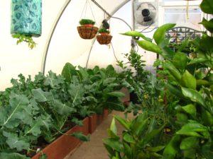 greenhouse 027