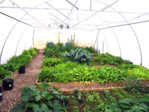greenhouse 20 010a